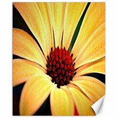 Osterspermum Canvas 16  X 20  (unframed) by Siebenhuehner