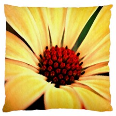 Osterspermum Large Cushion Case (two Sided)  by Siebenhuehner