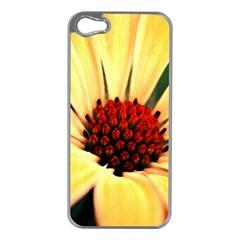 Osterspermum Apple Iphone 5 Case (silver) by Siebenhuehner