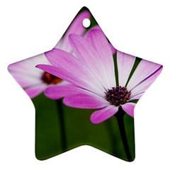 Osterspermum Star Ornament by Siebenhuehner