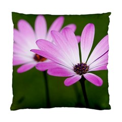 Osterspermum Cushion Case (two Sided)  by Siebenhuehner