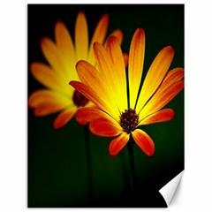 Osterspermum Canvas 12  X 16  (unframed) by Siebenhuehner
