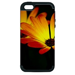Osterspermum Apple Iphone 5 Hardshell Case (pc+silicone) by Siebenhuehner
