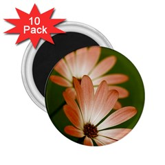 Osterspermum 2 25  Button Magnet (10 Pack)