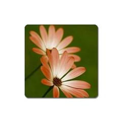 Osterspermum Magnet (square) by Siebenhuehner