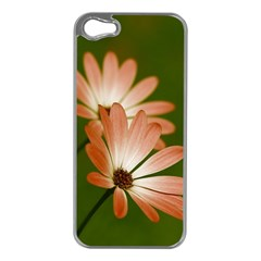Osterspermum Apple Iphone 5 Case (silver) by Siebenhuehner
