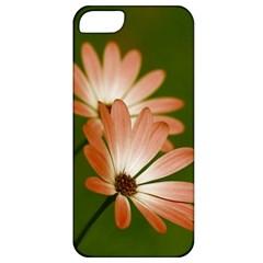 Osterspermum Apple Iphone 5 Classic Hardshell Case by Siebenhuehner