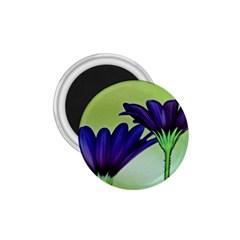 Osterspermum 1 75  Button Magnet by Siebenhuehner