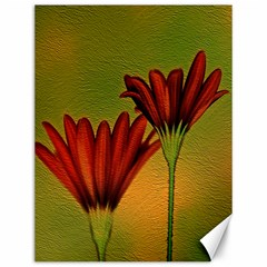Osterspermum Canvas 12  X 16  (unframed) by Siebenhuehner