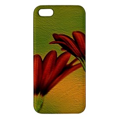 Osterspermum Iphone 5 Premium Hardshell Case by Siebenhuehner