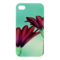Osterspermum Apple Iphone 4/4s Hardshell Case by Siebenhuehner
