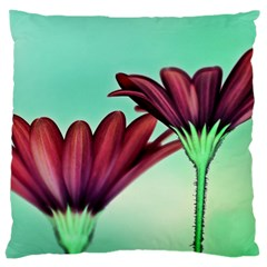 Osterspermum Large Cushion Case (two Sided)