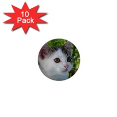Young Cat 1  Mini Button (10 Pack) by Siebenhuehner