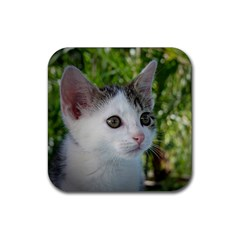 Young Cat Drink Coasters 4 Pack (square) by Siebenhuehner