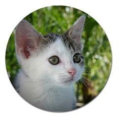Young Cat Magnet 5  (round) by Siebenhuehner