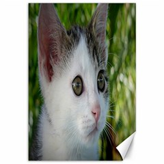 Young Cat Canvas 12  X 18  (unframed) by Siebenhuehner