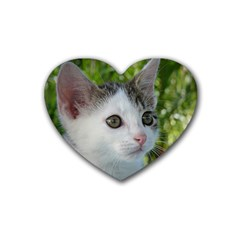 Young Cat Drink Coasters (heart)