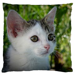 Young Cat Large Cushion Case (two Sided)  by Siebenhuehner
