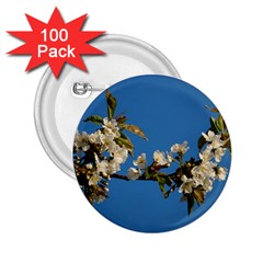 Cherry Blossom 2 25  Button (100 Pack)