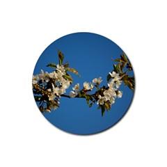 Cherry Blossom Drink Coasters 4 Pack (Round) by Siebenhuehner
