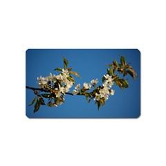 Cherry Blossom Magnet (name Card) by Siebenhuehner