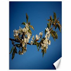 Cherry Blossom Canvas 12  X 16  (unframed) by Siebenhuehner