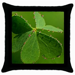 Drops Black Throw Pillow Case by Siebenhuehner