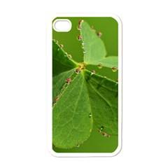 Drops Apple Iphone 4 Case (white) by Siebenhuehner
