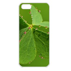 Drops Apple Iphone 5 Seamless Case (white) by Siebenhuehner