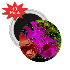 Tubules 2 25  Button Magnet (10 Pack) by Siebenhuehner