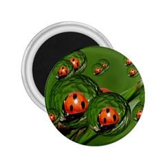 Ladybird 2 25  Button Magnet by Siebenhuehner
