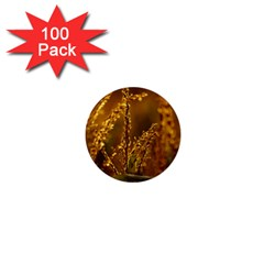 Field 1  Mini Button (100 Pack)