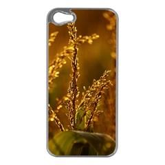 Field Apple Iphone 5 Case (silver) by Siebenhuehner