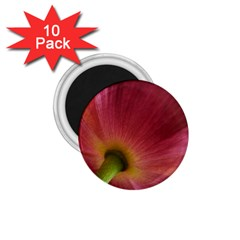 Poppy 1 75  Button Magnet (10 Pack)