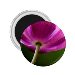 Poppy 2 25  Button Magnet by Siebenhuehner