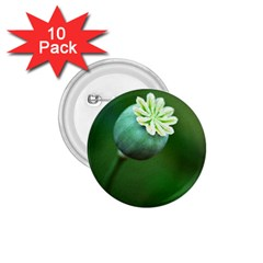 Poppy Capsules 1 75  Button (10 Pack)