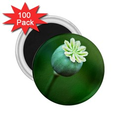 Poppy Capsules 2 25  Button Magnet (100 Pack)