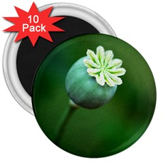 Poppy Capsules 3  Button Magnet (10 Pack) by Siebenhuehner