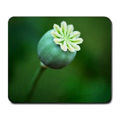 Poppy Capsules Large Mouse Pad (rectangle)