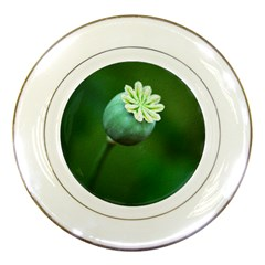 Poppy Capsules Porcelain Display Plate