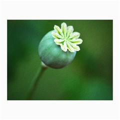 Poppy Capsules Canvas 20  X 30  (unframed) by Siebenhuehner