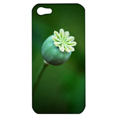 Poppy Capsules Apple Iphone 5 Hardshell Case by Siebenhuehner