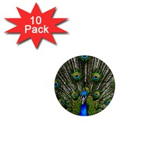 Peacock 1  Mini Button Magnet (10 Pack) by Siebenhuehner