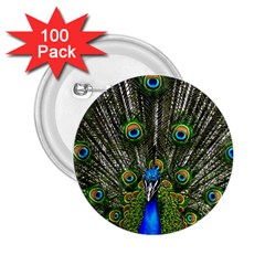 Peacock 2 25  Button (100 Pack)