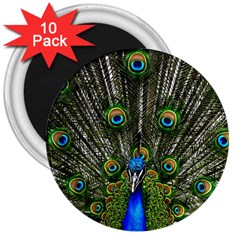Peacock 3  Button Magnet (10 Pack) by Siebenhuehner