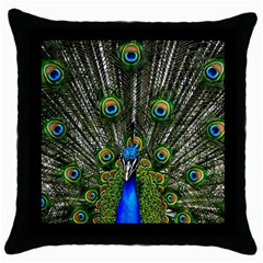 Peacock Black Throw Pillow Case by Siebenhuehner