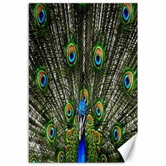 Peacock Canvas 12  X 18  (unframed) by Siebenhuehner