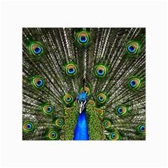 Peacock Canvas 24  X 36  (unframed)