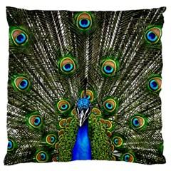 Peacock Large Cushion Case (single Sided)  by Siebenhuehner