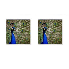 Peacock Cufflinks (square)